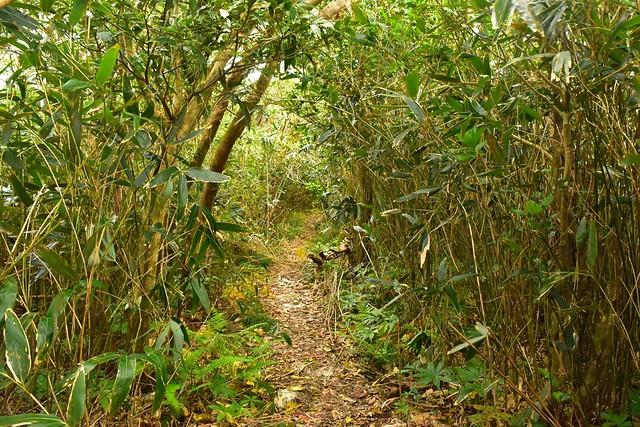 三原山 草木のトンネル