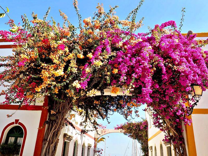 flowers gran canaria