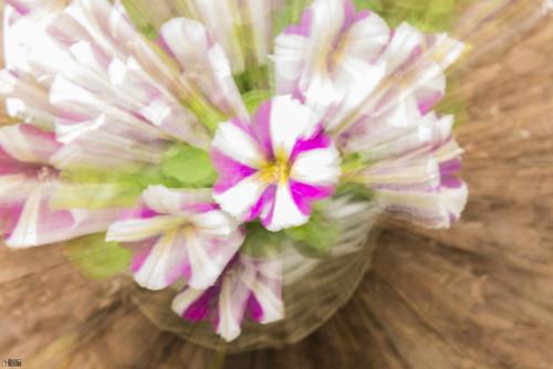 Flower Zoom !