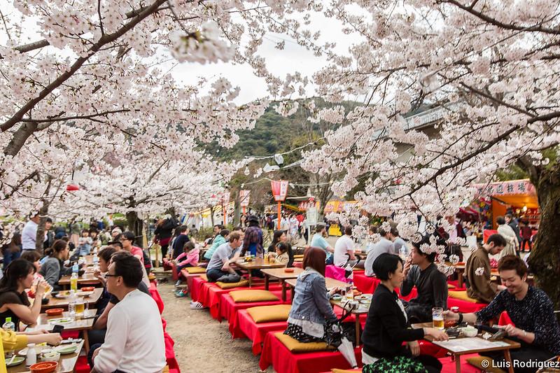 Maruyama-Park-Kioto-14