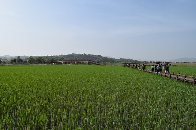 Suncheon Bay Wetland (9)