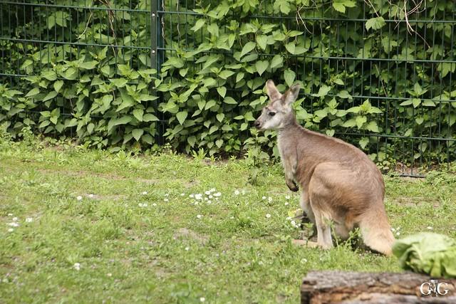 Besuch Tierpark Friedrichsfelde 21.05.201756