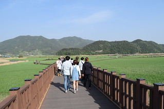 Suncheon Bay Wetland (6) | by markvale2