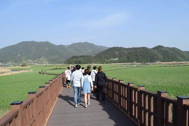 Suncheon Bay Wetland (6)
