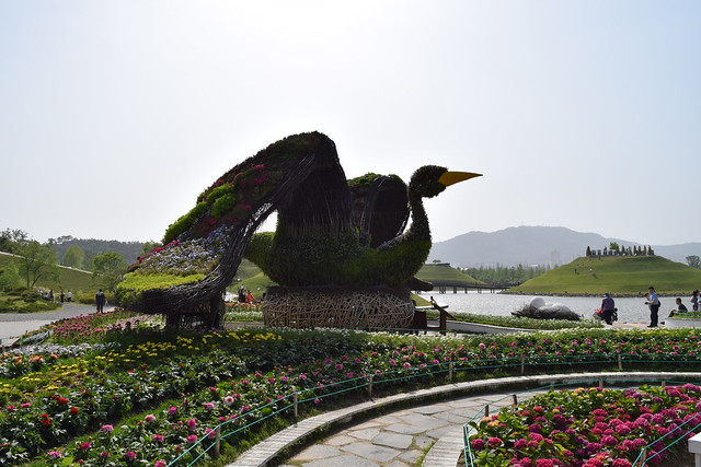 Suncheon Bay National Garden (21)