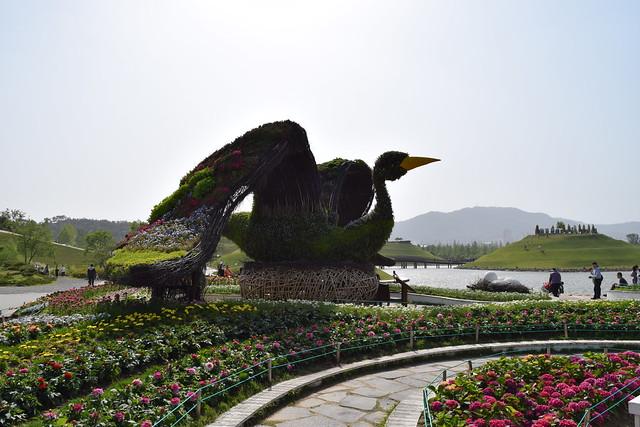 Suncheon Bay National Garden (21)