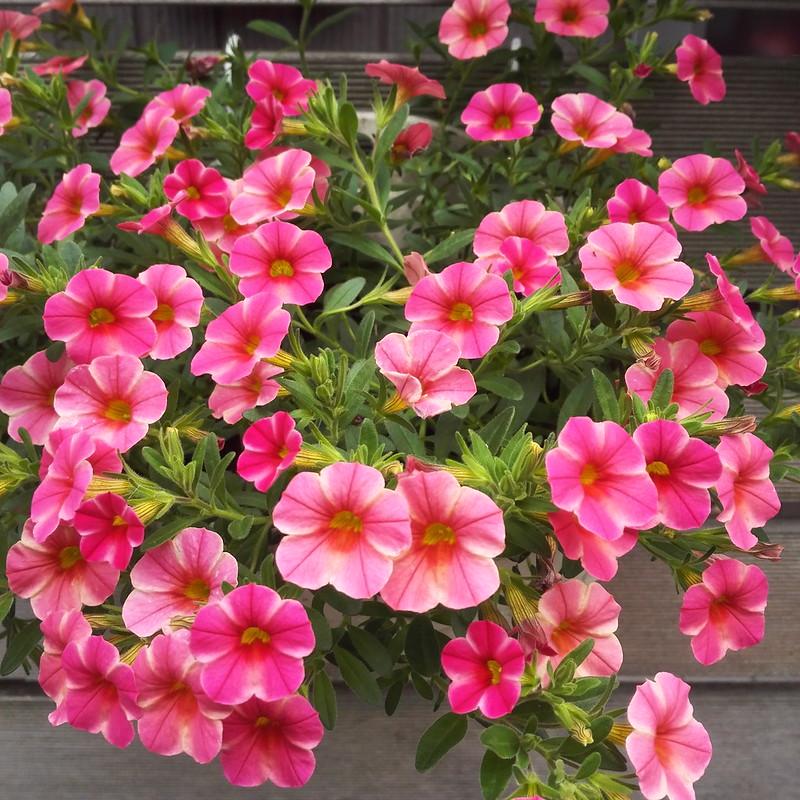 6月の可愛い花