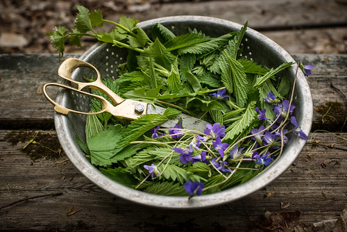 Foraged Nettle, Dandelion, Violets | by goingslowly