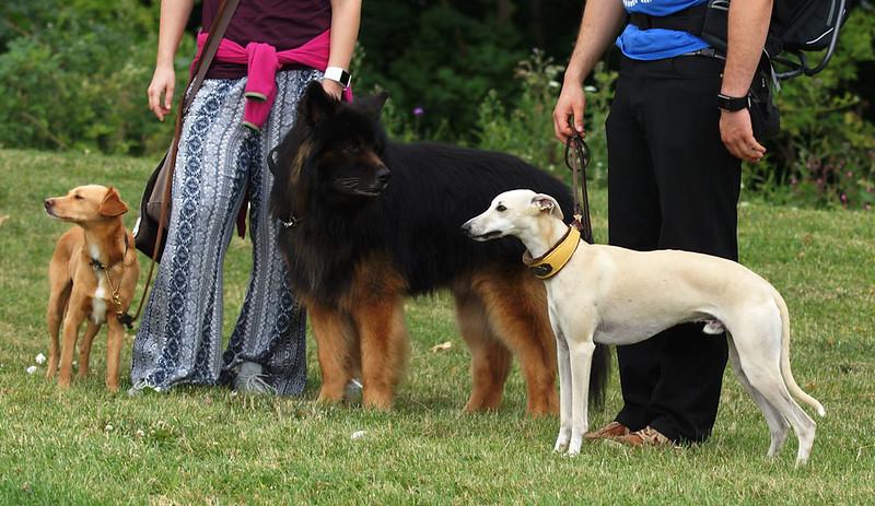 Feivels Hundefamilie