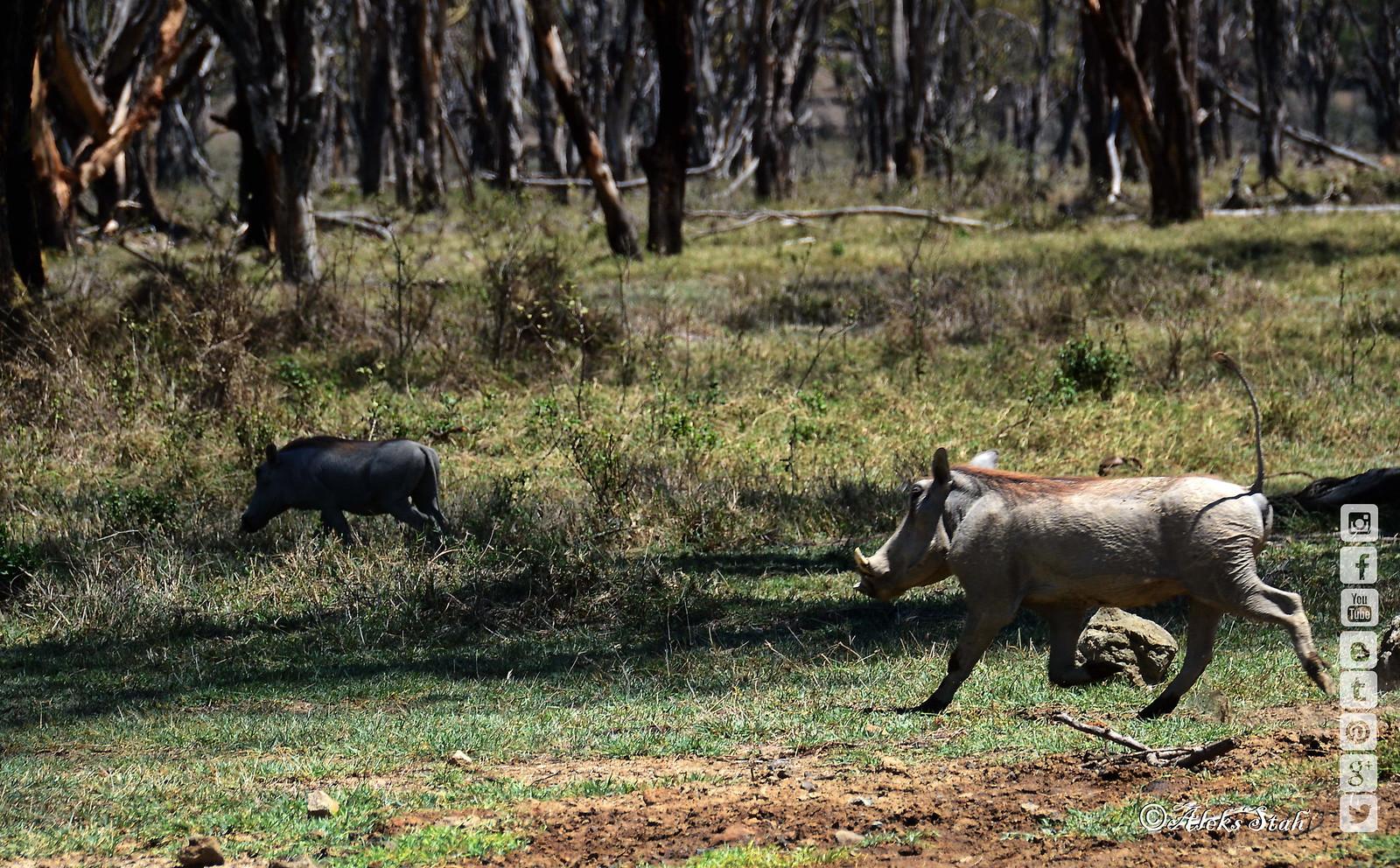 Kenya. Природа Кении