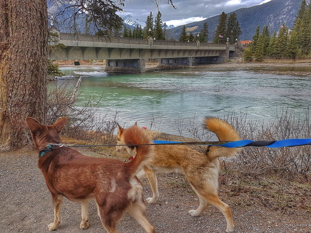 Banff Loki Thor Walk