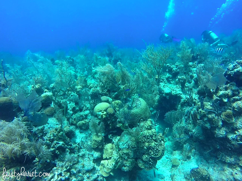 Scuba Belize 14_feistyharriet_April 2017
