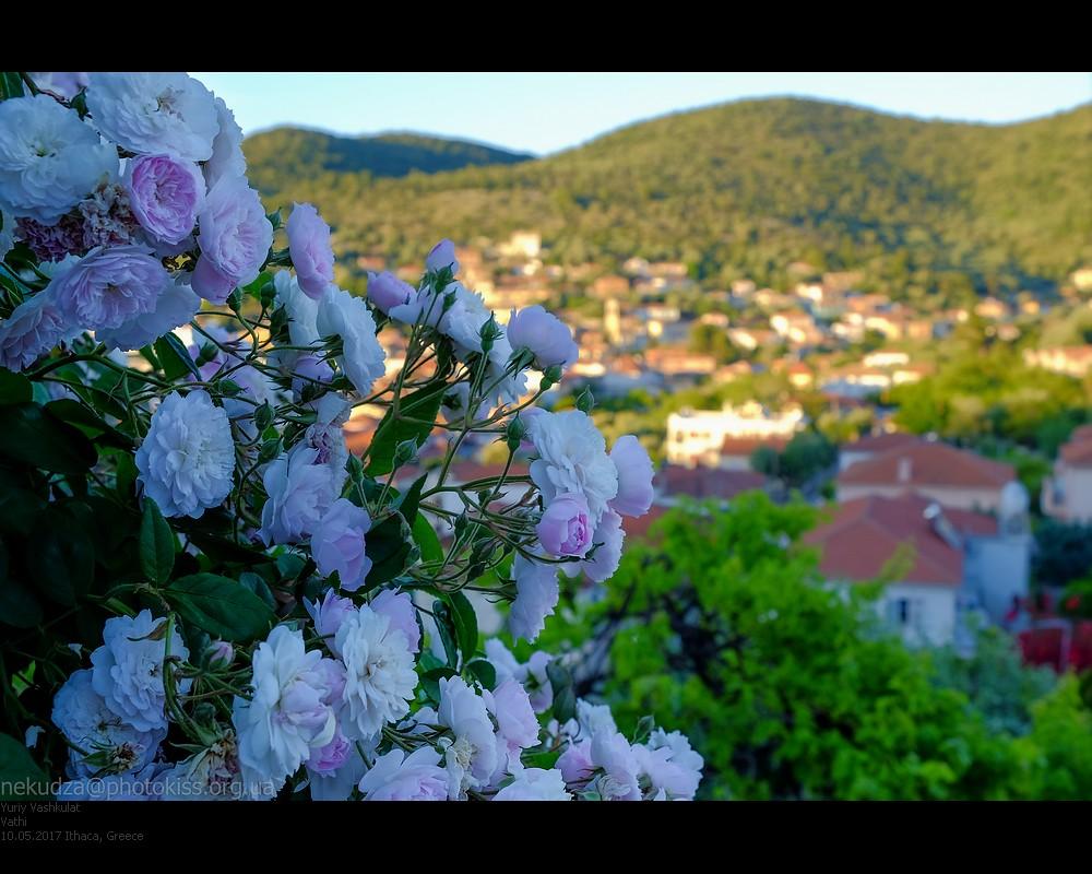 ithaca_vathi_flowers2
