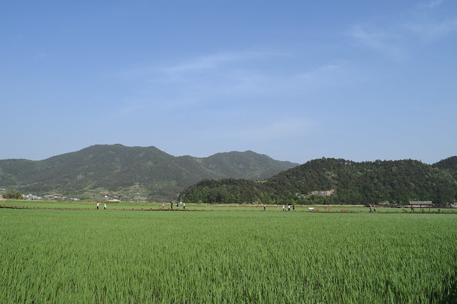 Suncheon Bay Wetland (8)