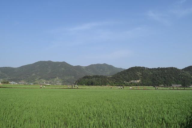 Suncheon Bay Wetland (8)