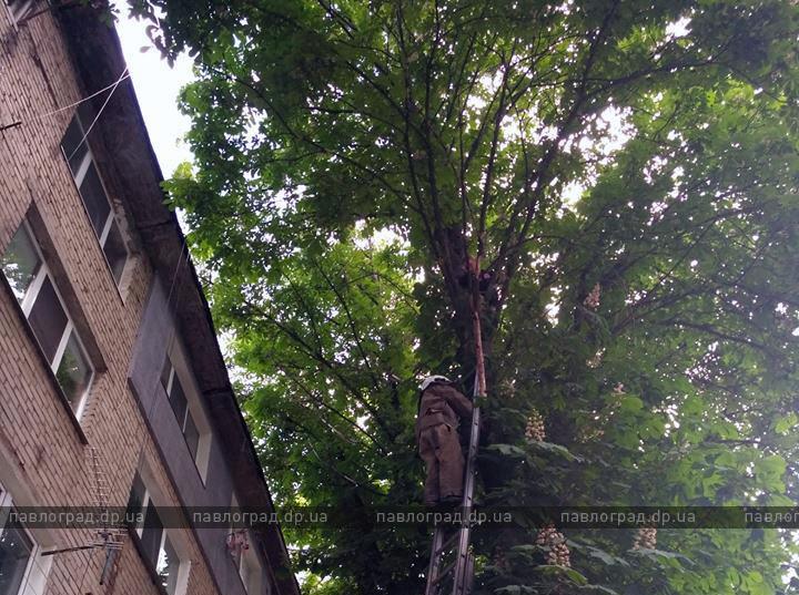 ребенок на дереве 1