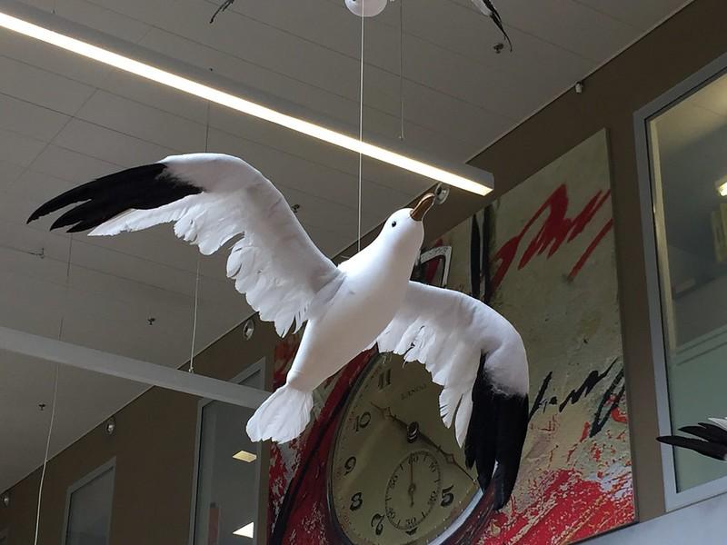 Supermarket bird