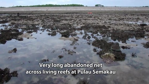 Very long abandoned net on Pulau Semakau (East), Jun 2017