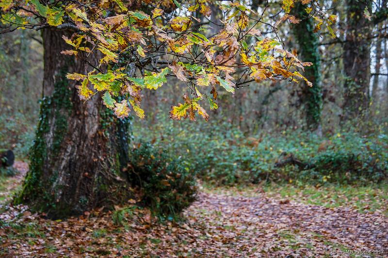 Hojas de roble en el Bosque de Orgi