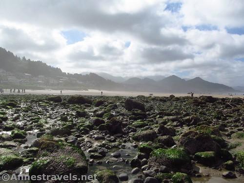 Tide pools below Haystack Rock on Cannon Beach, Oregon