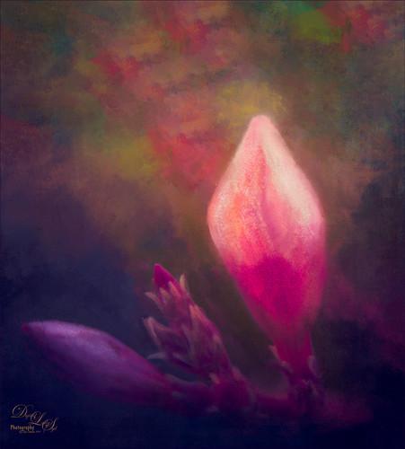Close-up image of an Oleander Flower
