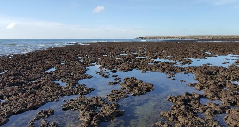 大潭藻礁的美麗地景,潘忠政攝於第2道堤至第3道堤之間