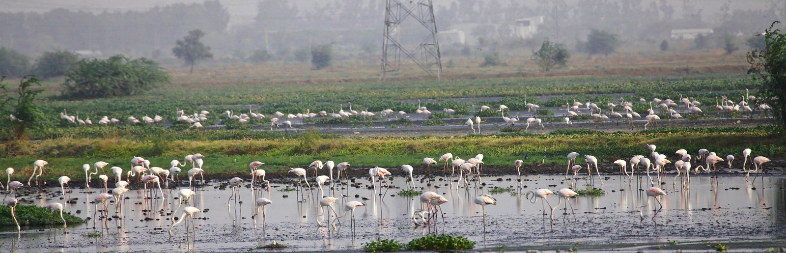 Najafgarh Wetland Birding