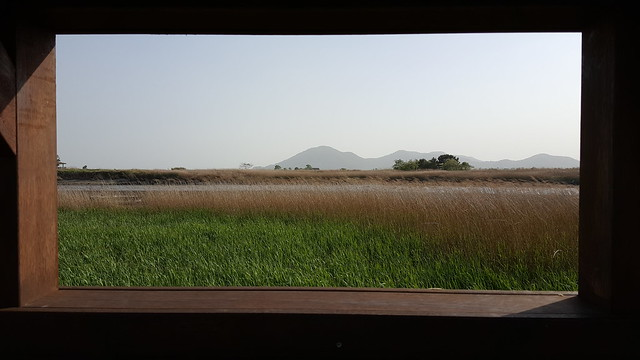 Suncheon Bay Wetland (23)