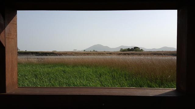 Suncheon Bay Wetland (23)