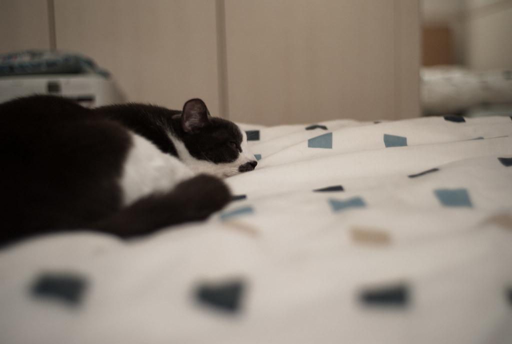 添い寝しに来たオージロー