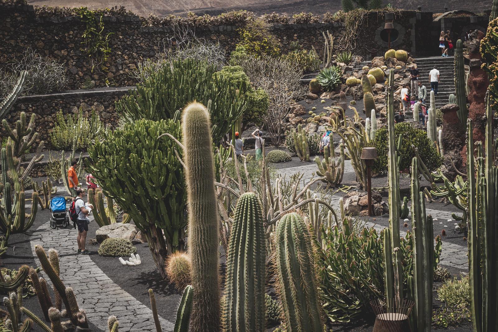 Lanzarote, Jardin de Cactus