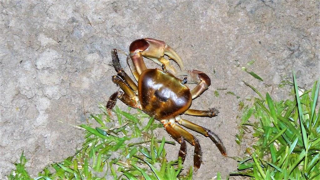 Crab Seychelles