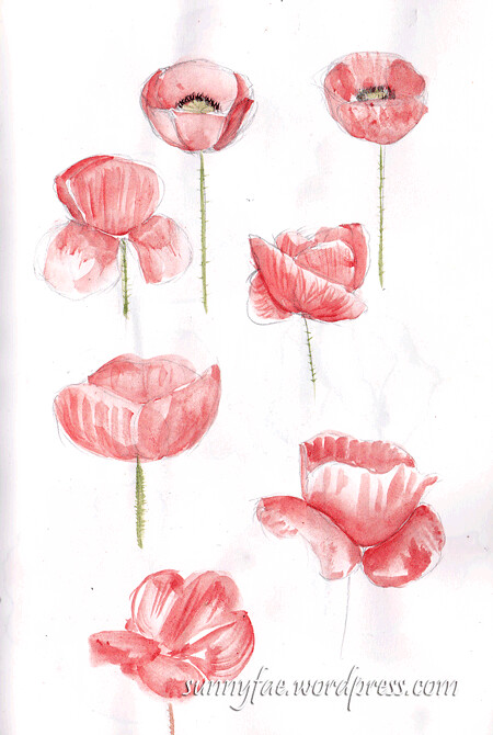 Sketching poppies 1