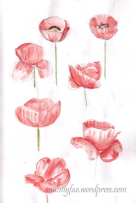 Sketching poppies 1