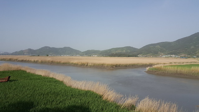 Suncheon Bay Wetland (20)