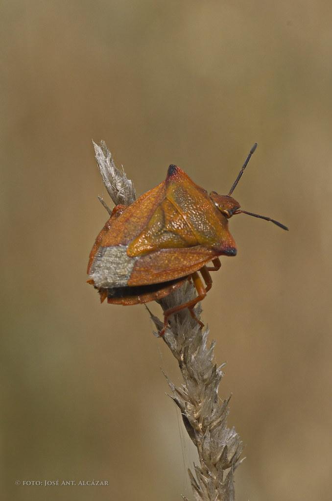 Fotos del VII testing de biodiversidad Tablas de Daimiel