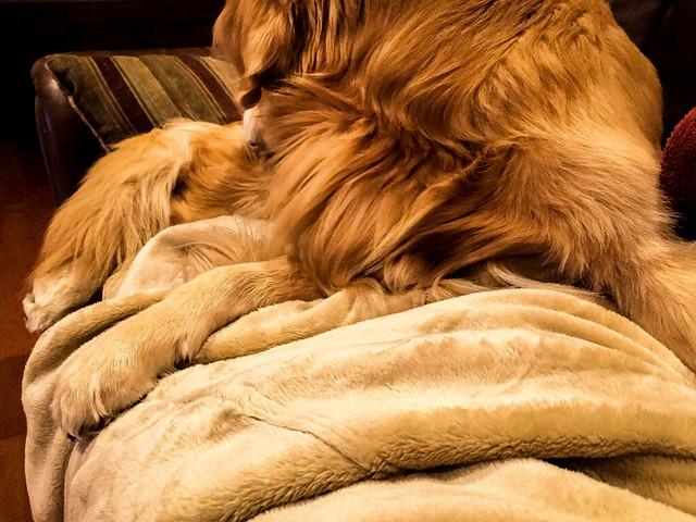 Paw Rest