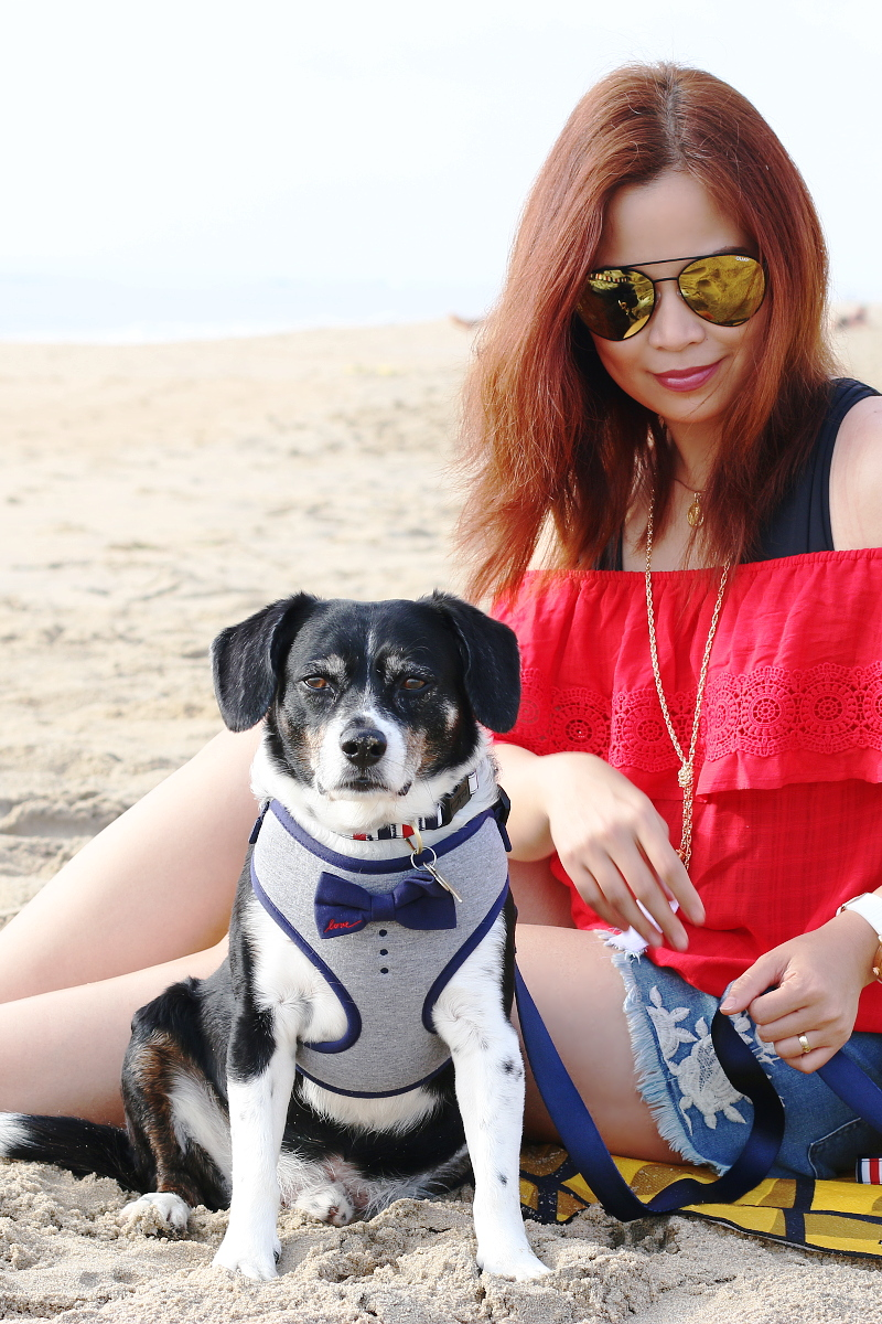 bowtie-red-white-blue-dog-outfit-beach-11