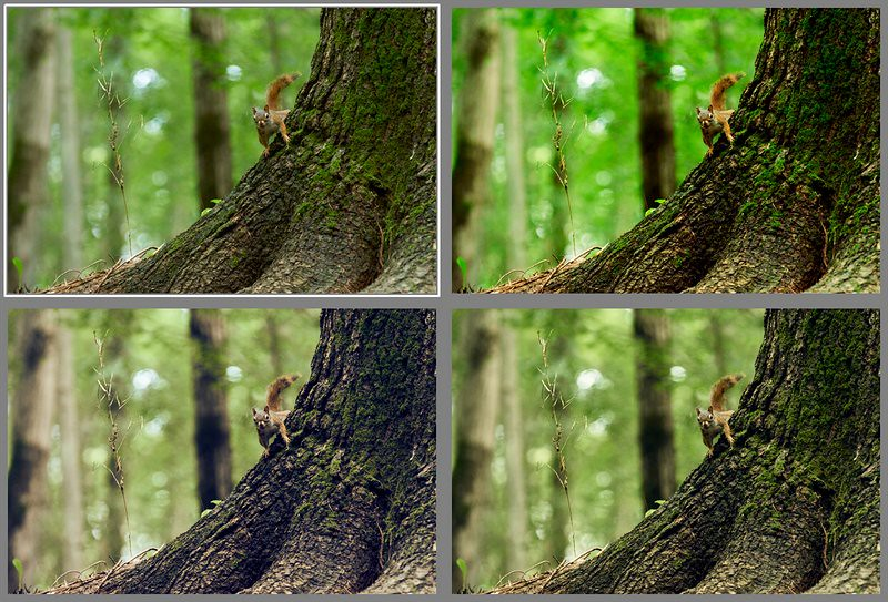 capture-one-styles-seasonal-animal
