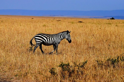 The Great Migration In Tanzania. From Intriguing Destinations to See Animals in Their Natural Habitats