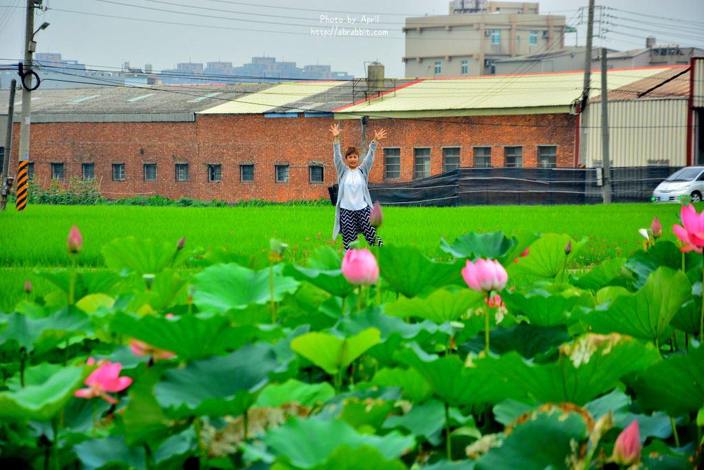 台中清水景点|清水龙猫隧道、田边荷花池、三太宫涂鸦墙、绿色天桥隧道