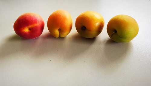 Apricots / Aprikosen
