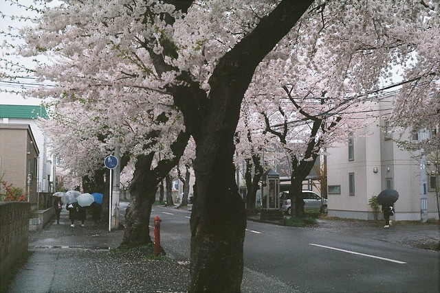 Sakura terminating rain