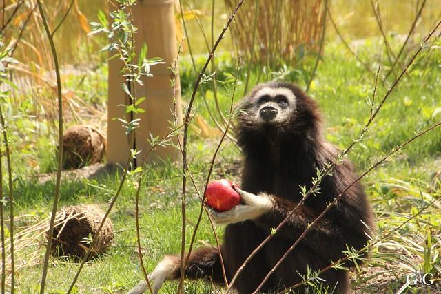 Besuch Tierpark Friedrichsfelde 21.05.201748