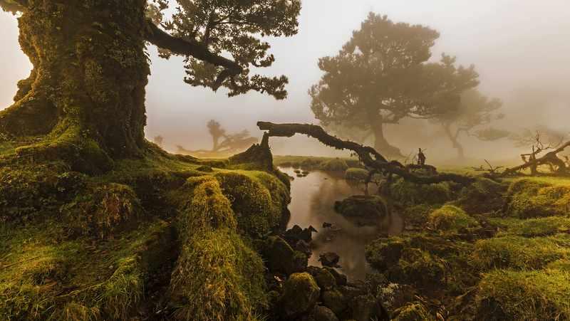 O_Fanal,_Ilha_da_Madeira,_Portugal-002