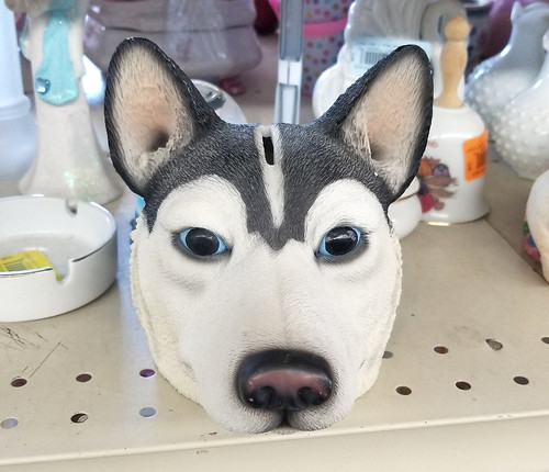 husky piggy bank