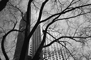Chicago Building Through the Trees | by Austin Beeman