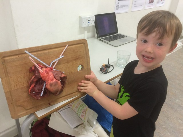 Heart: pump it up activity from chapter 5 of Messy Church Does Science