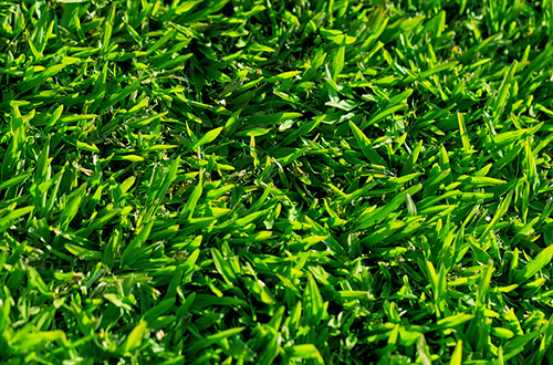grama esmeralda
