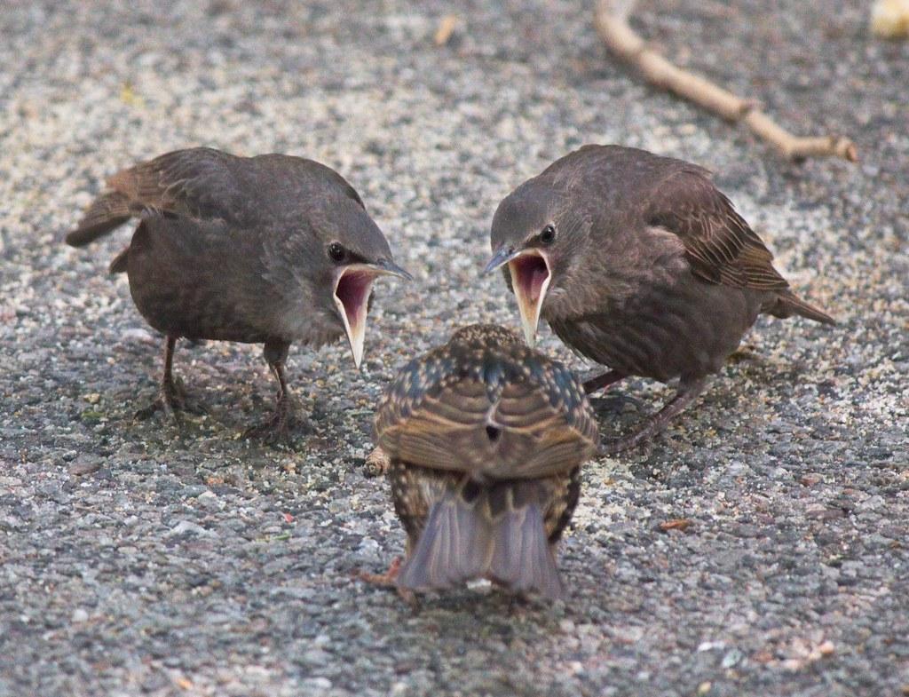 FEED US!!!